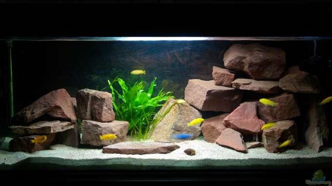 Aquarium Wohnzimmer Ideen
