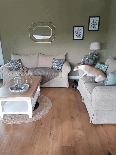 Mein Wohnzimmer tolle Sofas und 5 Minuten Hunde
