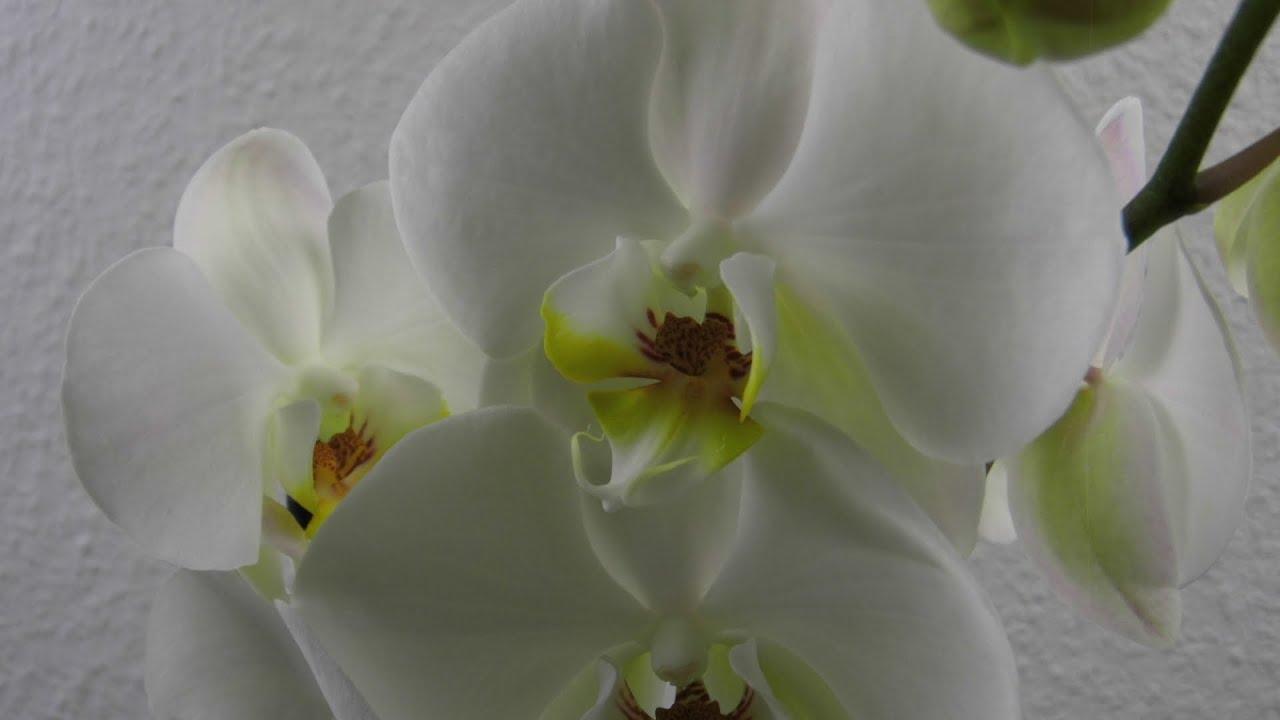 Orchideen im Glas Deko Ideen mit Flora Shop